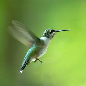 Acceptance and Commitment Therapy Southampton. Act therapy counselling. Humming bird.