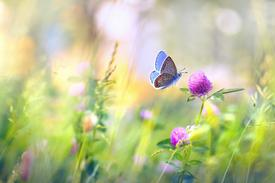 ACT therapy Southampton. Behaviour change counselling. CBT Acceptance and commitment. Butterfly field.